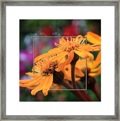 Framed Print featuring the photograph Autumn's Glory by Sandra Foster
