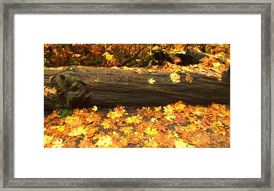 Autumn's Gold Framed Print