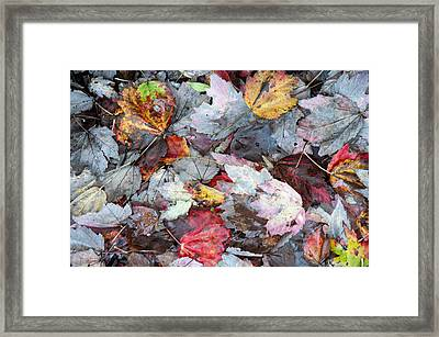 Autumn's Leaves Framed Print by Allen Carroll