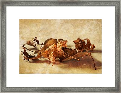 Autumn's Leavings Framed Print by Caitlyn  Grasso