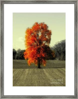 Autumn's Living Tree Framed Print