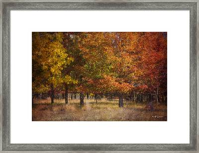 Autumn's Miracle Framed Print by Jeff Swanson