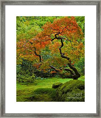 Autumn's Paintbrush Framed Print