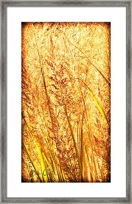 Autumns Passion Framed Print