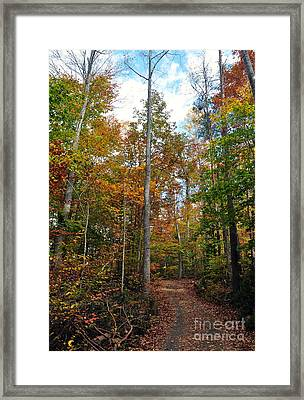 Autumn's Path Framed Print by Gina Savage
