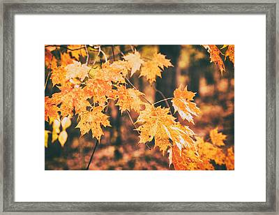 Autumns Patience Framed Print by Karol Livote