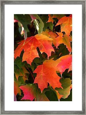 Autumn's Peak Framed Print by Paula Tohline Calhoun