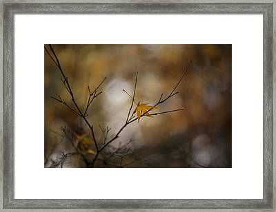 Autumns Solitude Framed Print by Mike Reid