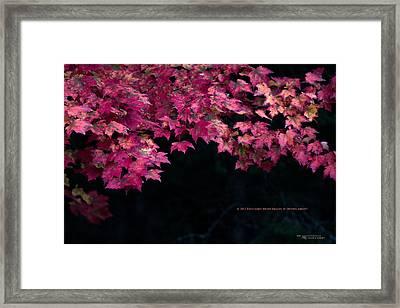 Autumn's Splendor Framed Print