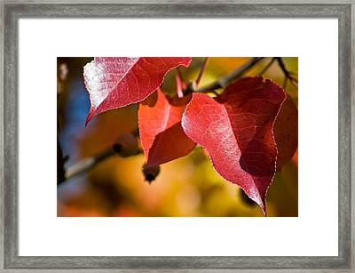 Autumn's Three Graces Framed Print