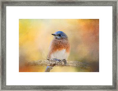 Autumn's Treasure Framed Print
