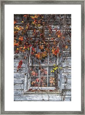 Autumn's Window Curtains Framed Print