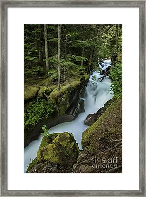Avalanche Creek Under The Giant Cedars Framed Print