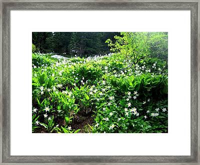 Avalanche Lilies Framed Print by Karen Molenaar Terrell