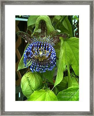 Avatar Blue Framed Print