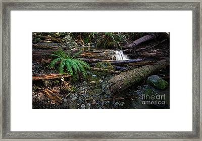 Avatar Grove Creek Bed Framed Print by Carrie Cole
