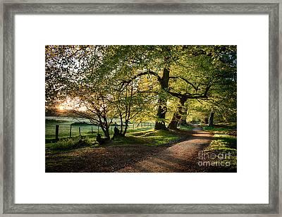 Avenue Of Light Framed Print