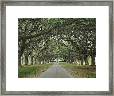 147706-avenue Of The Oaks  Framed Print