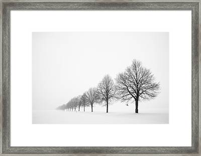Avenue With Row Of Trees In Winter Framed Print by Matthias Hauser