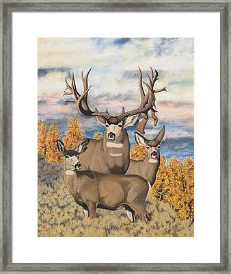 Avery Buck Framed Print