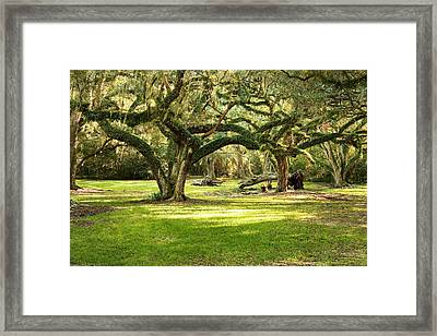 Avery Island Oaks Framed Print by Scott Pellegrin
