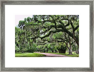 Avery Island Vi Framed Print
