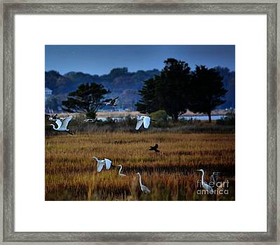 Aviary Convention Framed Print