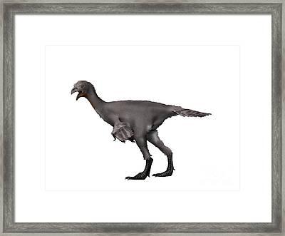 Avimimus Dinosaur Framed Print by Nobumichi Tamura