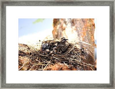 Framed Print featuring the photograph Aw Mom-a Curfew? by R B Harper