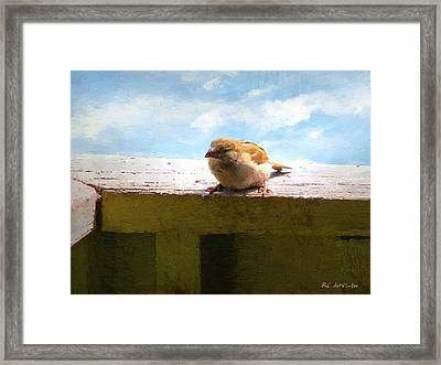 Aw Shucks Framed Print