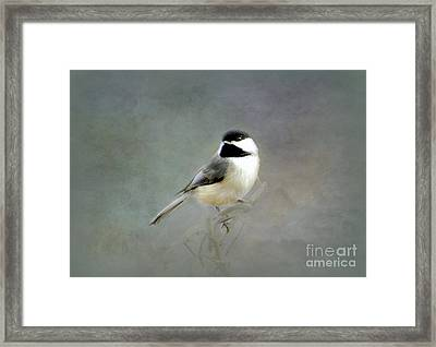 Framed Print featuring the photograph Awaiting Spring by Brenda Bostic