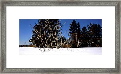 Awaiting Spring Framed Print by Danielle  Broussard