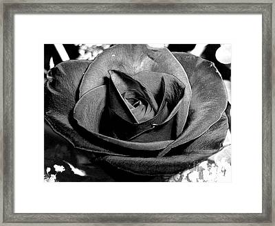Awakened Black Rose Framed Print by Nina Ficur Feenan