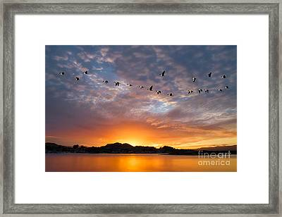 Awakening Framed Print by Alice Cahill