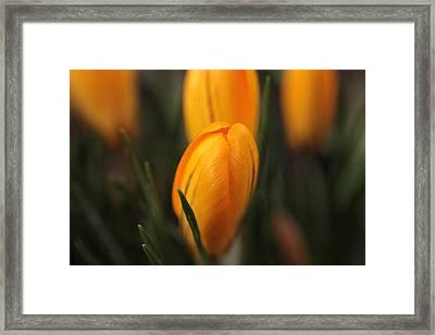 Awakening Framed Print by Connie Handscomb