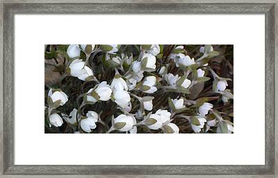 Awakening Framed Print by Dina  Stillwell