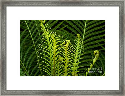 Awakening Framed Print by Julia Hiebaum