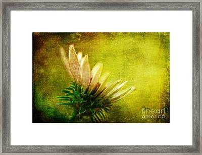 Awakening Framed Print by Lois Bryan
