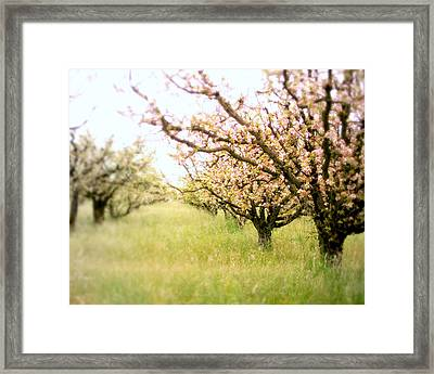Awakening Framed Print by Lupen  Grainne