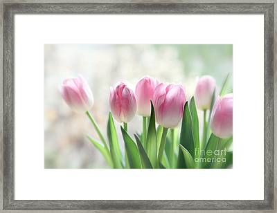 Awakening- Pale Pink Tulips Framed Print by Sylvia Cook