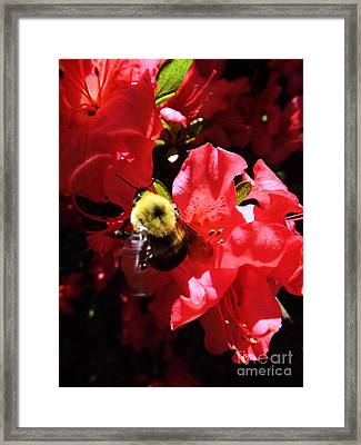 Framed Print featuring the photograph Awakening by Robyn King