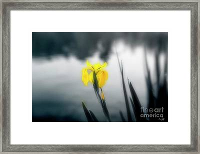 Awakening Framed Print by Scott Pellegrin