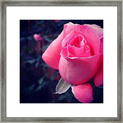 Away Framed Print by CML Brown