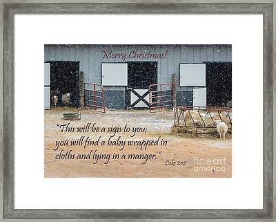 In A Manger Framed Print