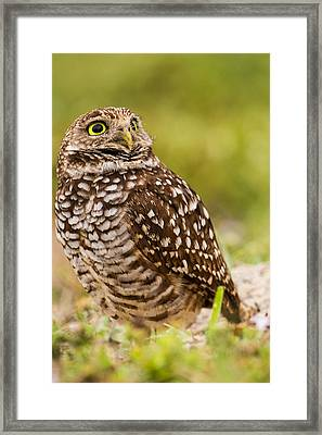 Awe Inspiring Owl Framed Print by Andres Leon