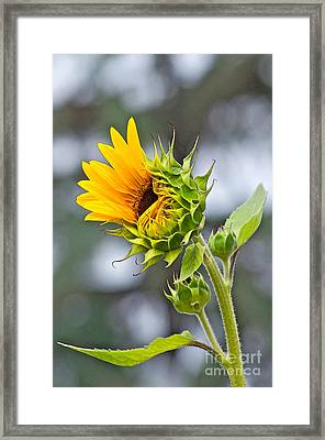 Awe What The Heck Framed Print by Gwyn Newcombe