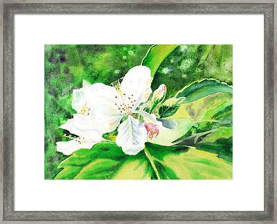 Awesome Apple Blossoms Framed Print