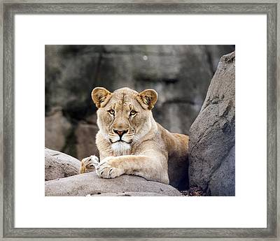 Awesome Cat Framed Print by Tammy Smith