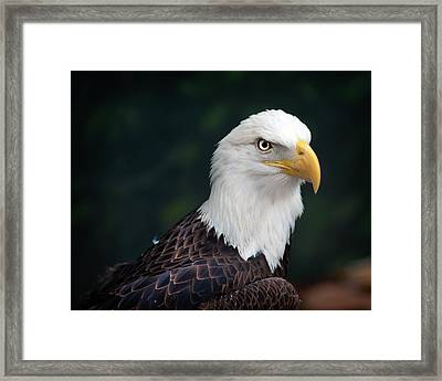 Awesome Eagle Framed Print by Tammy Smith