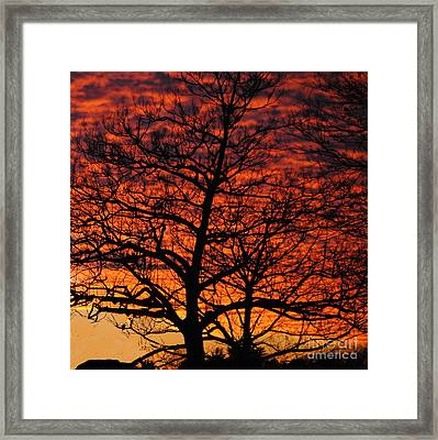 Awesome Winter Sunset - Longwood Gardens - Square Framed Print by Jacqueline M Lewis
